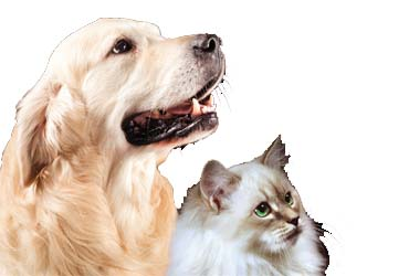 - $5 off Full Groom for Cats & Dogs