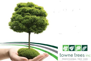 - 10% Off Any Tree Care Service