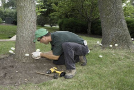 Arbor Care Tree Services Inc Coupon